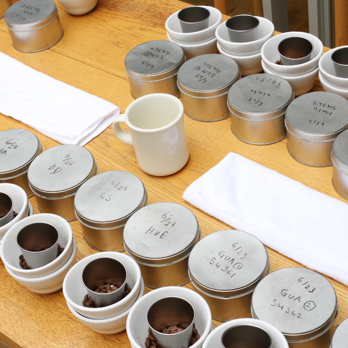 カッピングに使用されるコーヒー豆とカップ。季節によって豆の種類も焙煎の方法も変わる。